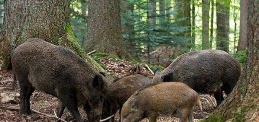 Охотничий фонд