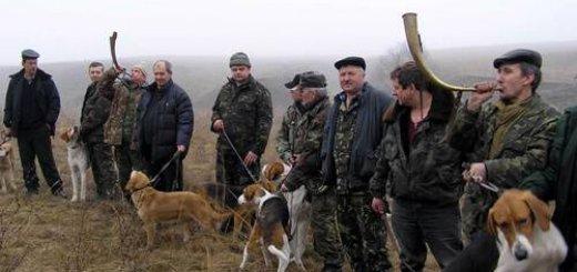 Испытания гончих собак