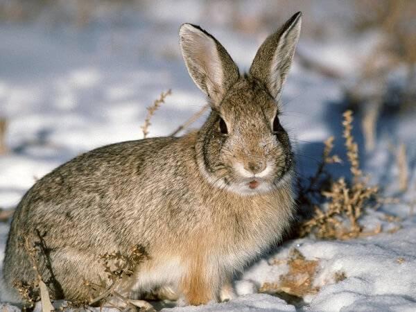 Объект охоты - заяц