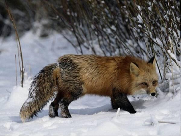 Болезни диких животных
