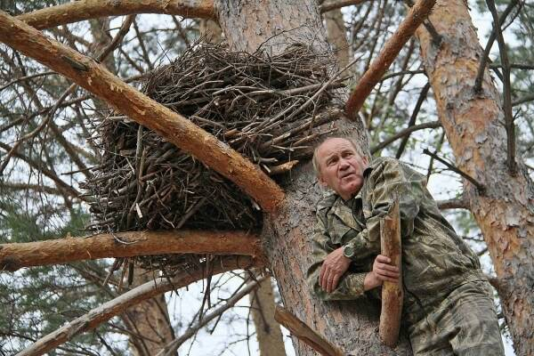 Искусственное гнездо