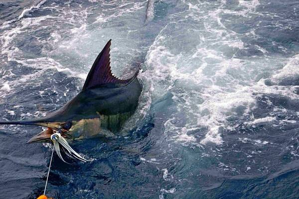 Рыбалка на марлинов