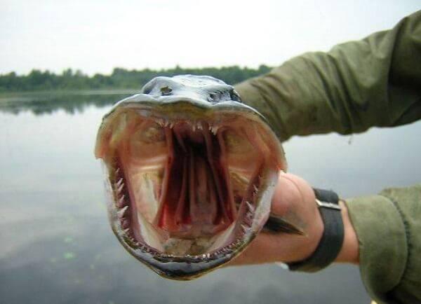 Рыбалка на щуку на водохранилище видео