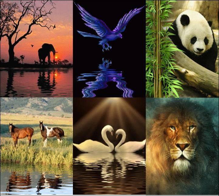 Численность животных