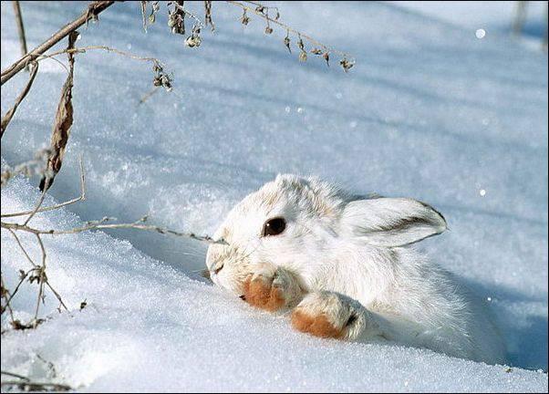 Охота на зайца котлом