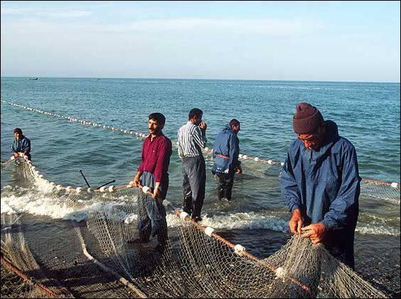 Лимит на отлов лососевых