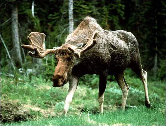 Улучшение среды обитания животных