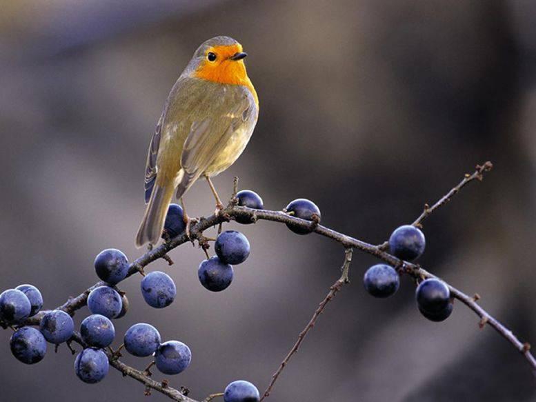 Ядохимикаты и птицы