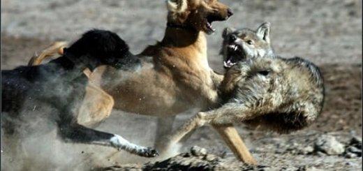 Охота в степной местности