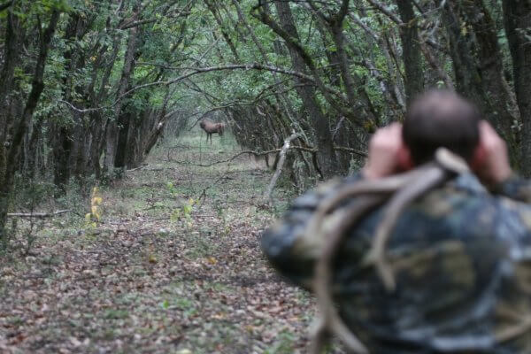 Загонная охота
