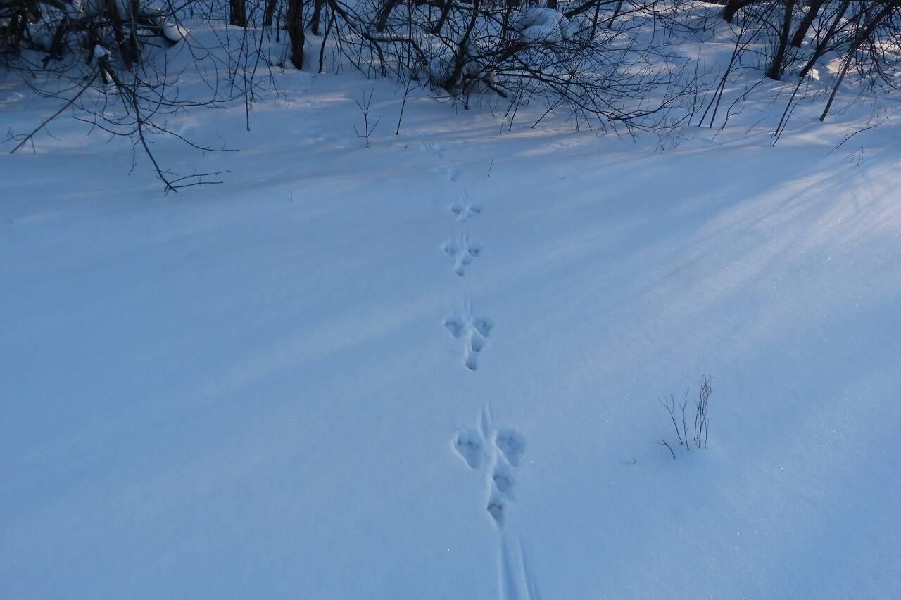 время путин фото заячьих следов на снегу поделки, соблюдайте