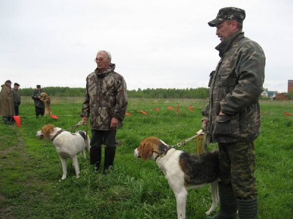 Дрессировка охотничьих собак