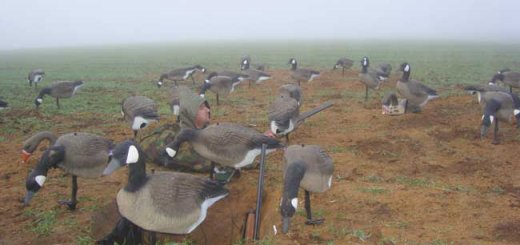 Добыча гусей