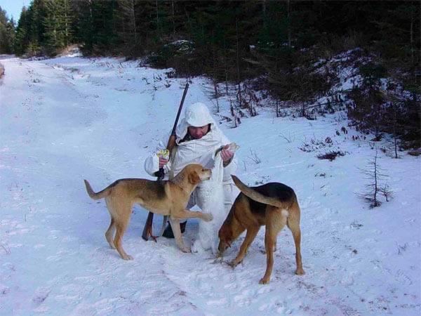 Охота с гончими на зайцев