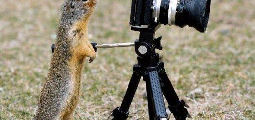 Охота с фотокамерой