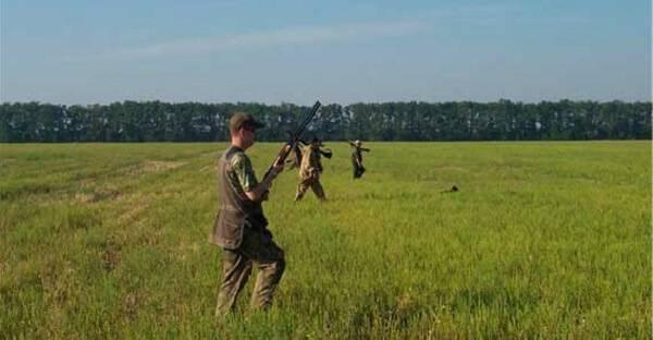Охота на перепелов