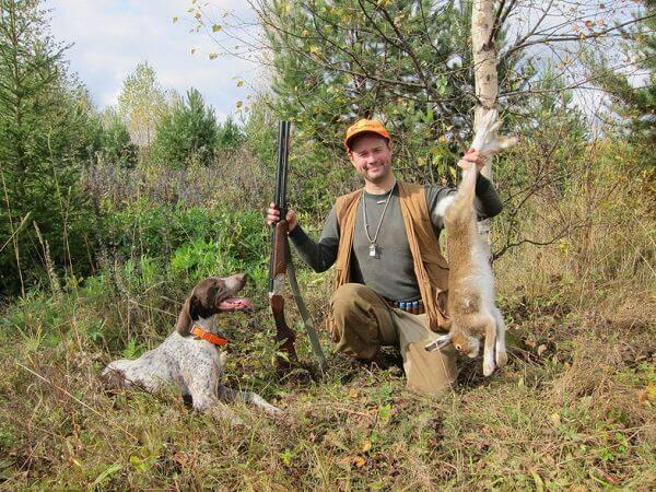 Охота на зайца с легавой