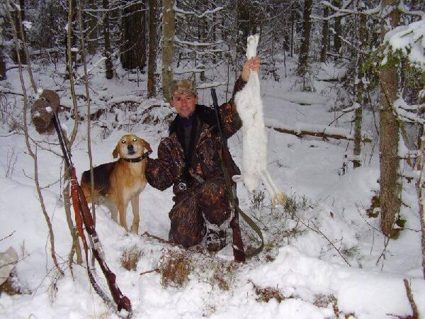 Охота с гончей по белой тропе