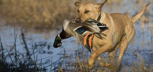 Производительность охотничьих угодий