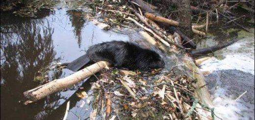 Опыт в охотничьем хозяйстве