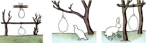 Петли на зайцев
