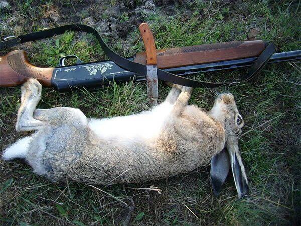 После охоты на зайцев