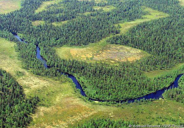 Притундровые леса