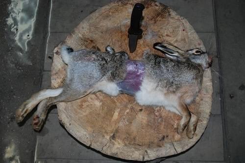 Разделка зайца