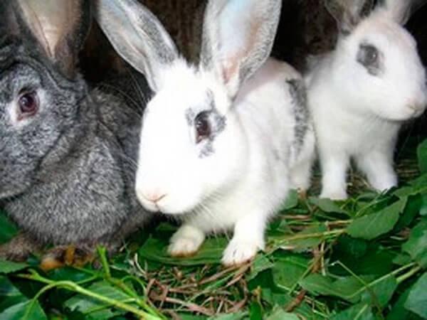 Заяц-тумак