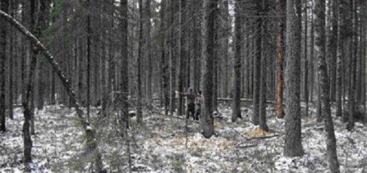 Бонитировка охотничьих угодий