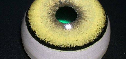 Глаза для чучел