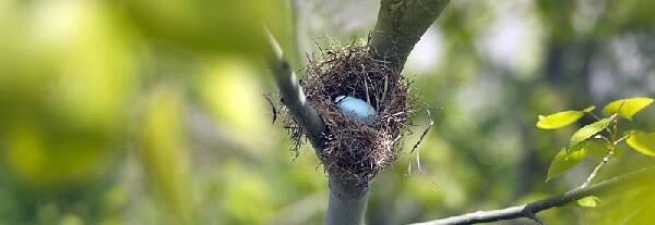 Гнездо птиц