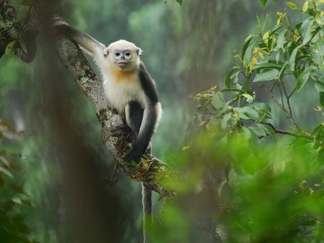 Животный мир Вьетнама