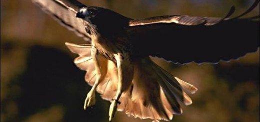 Истребление хищных птиц