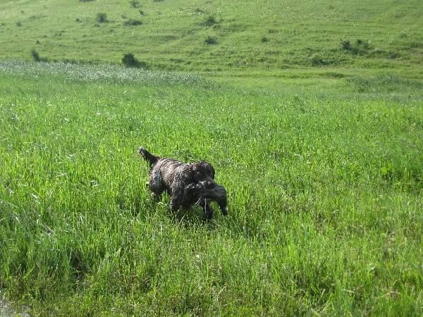 Охота с легавой