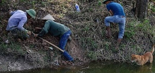 Охота на крыс во Вьетнаме