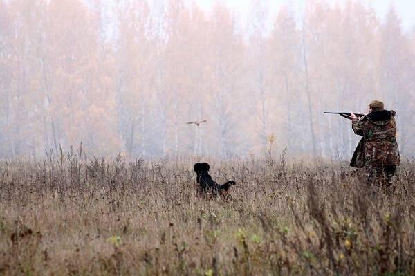 Охота в охотничьих хозяйствах