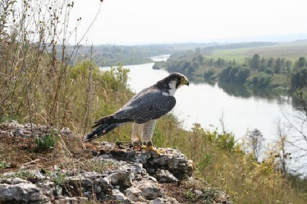 Охотничье хозяйство Сербии