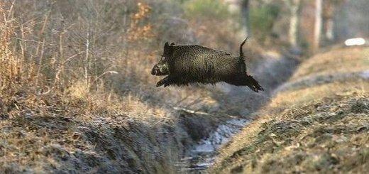 Охотничье хозяйство