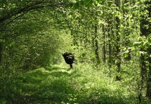 Охотничье хозяйство Польши