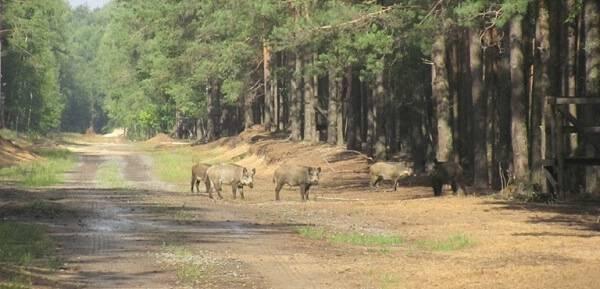 Охотничья фауна в Чехии и Словакии