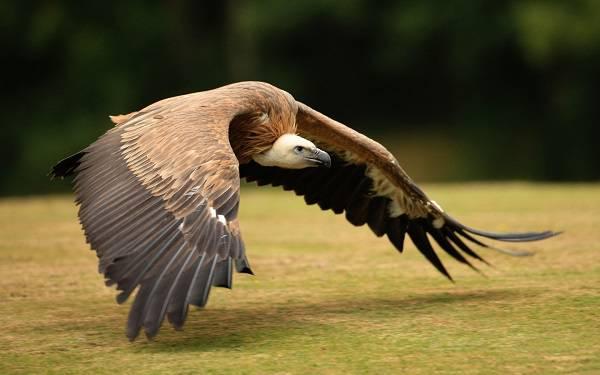 Оперение птиц