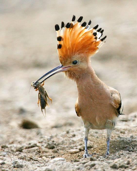 Питание птицы