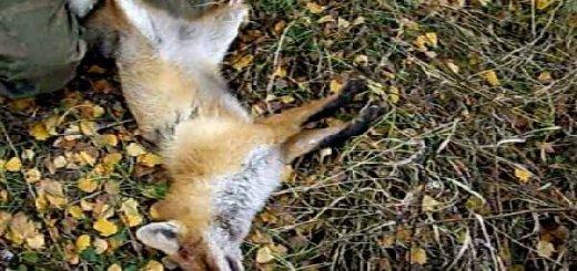 Разделка лисы