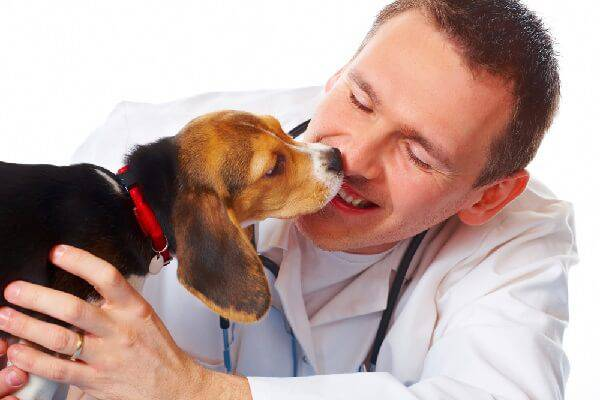 Советы ветеринара собаководу