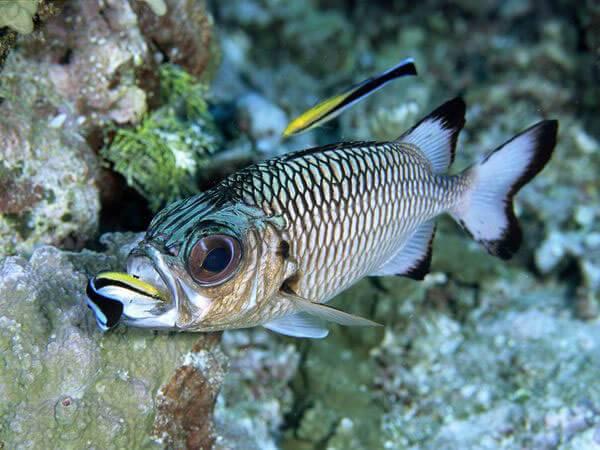 Численность рыб