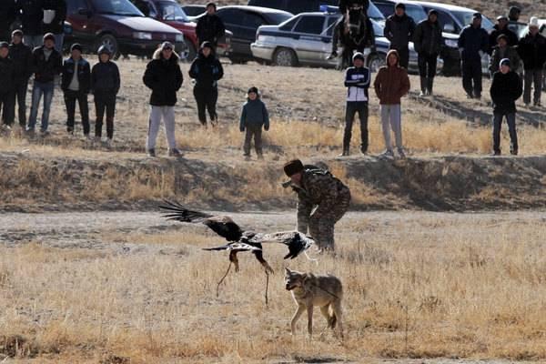 Ловля шакала птицами