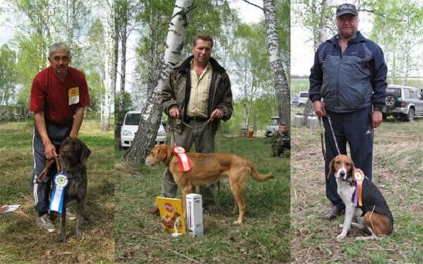 Оценка собак