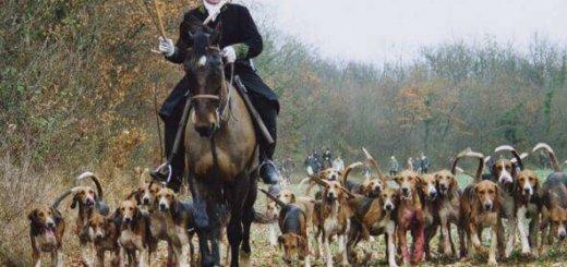 Охота во Франции