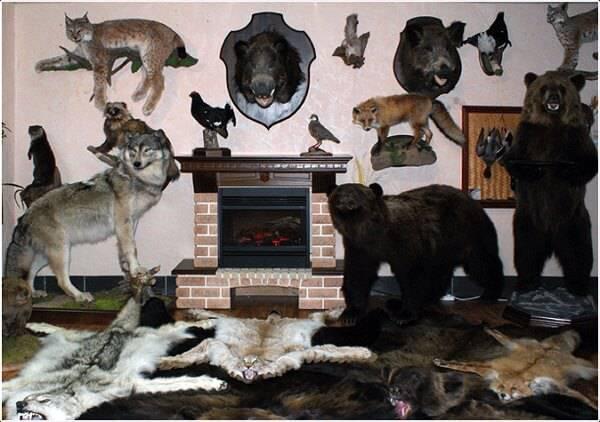 Охотничьи трофеи и украшения